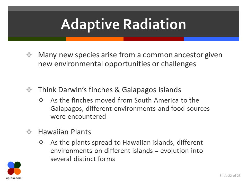 Adaptive Radiation Many new species arise from a common ancestor given new environmental opportunities or challenges.