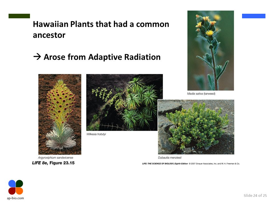 Hawaiian Plants that had a common ancestor