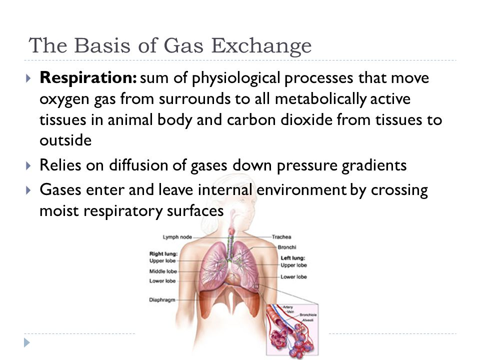 The Basis of Gas Exchange