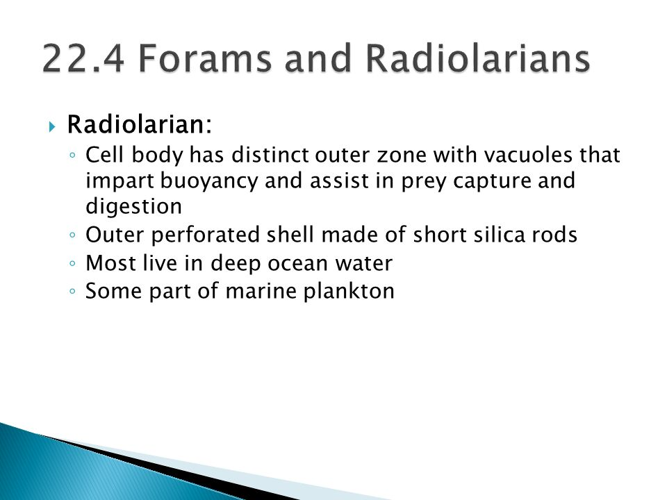 22.4 Forams and Radiolarians