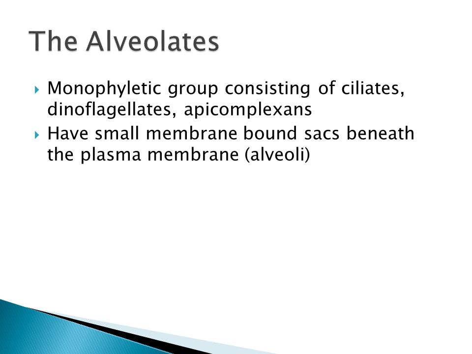 The Alveolates Monophyletic group consisting of ciliates, dinoflagellates, apicomplexans.