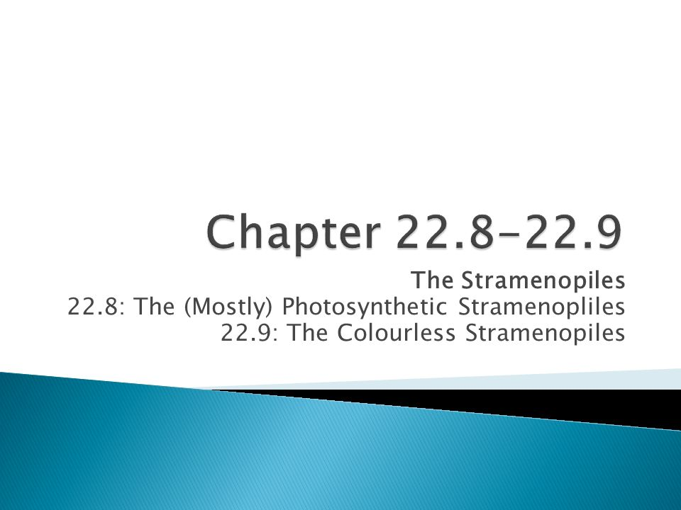 Chapter 22.8-22.9 The Stramenopiles