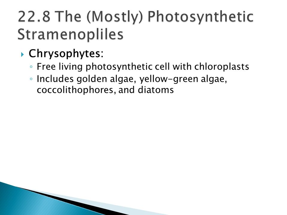 22.8 The (Mostly) Photosynthetic Stramenopliles