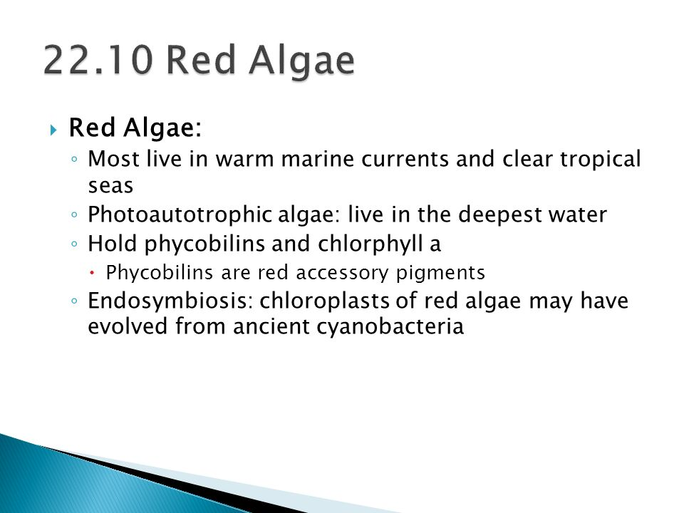 22.10 Red Algae Red Algae: Most live in warm marine currents and clear tropical seas. Photoautotrophic algae: live in the deepest water.