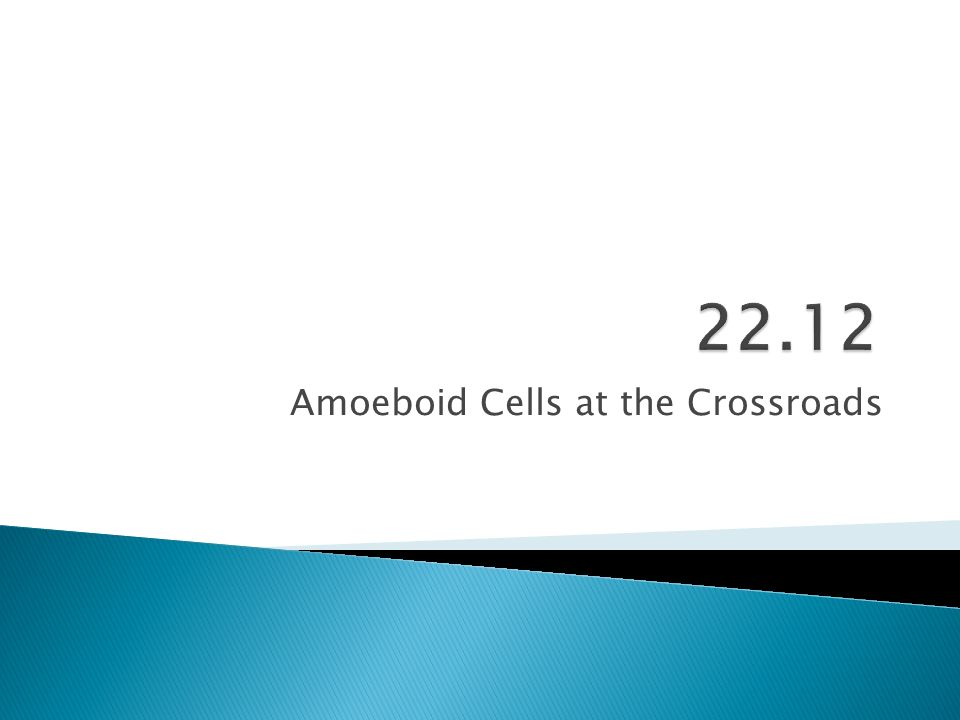 Amoeboid Cells at the Crossroads
