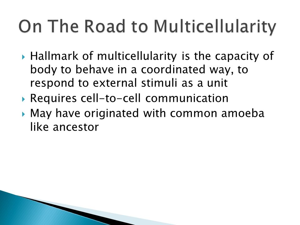 On The Road to Multicellularity
