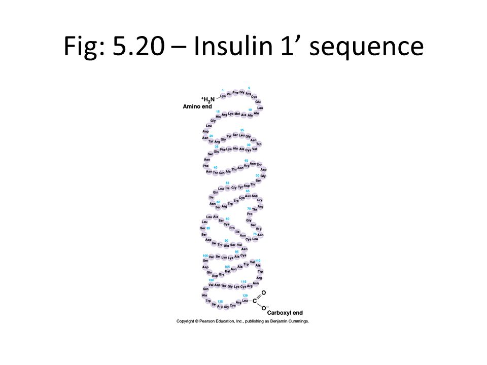 Fig: 5.20 – Insulin 1' sequence