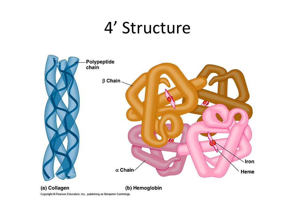 4' Structure