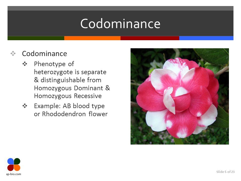 Codominance Codominance