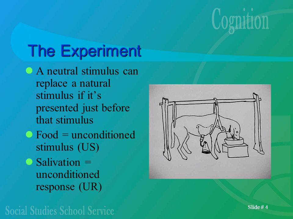 The Experiment A neutral stimulus can replace a natural stimulus if it's presented just before that stimulus.