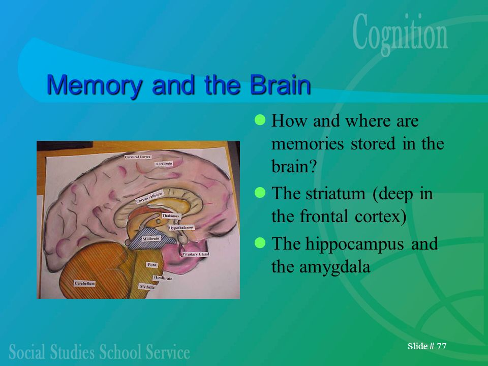 Memory and the Brain How and where are memories stored in the brain