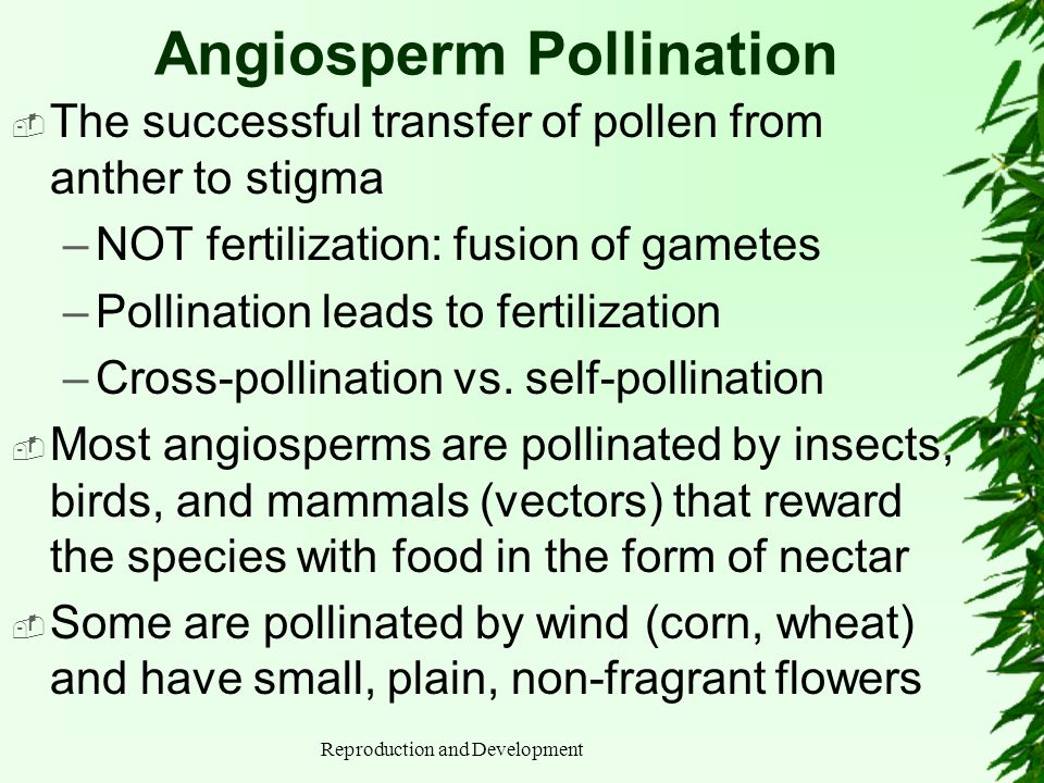 Angiosperm Pollination