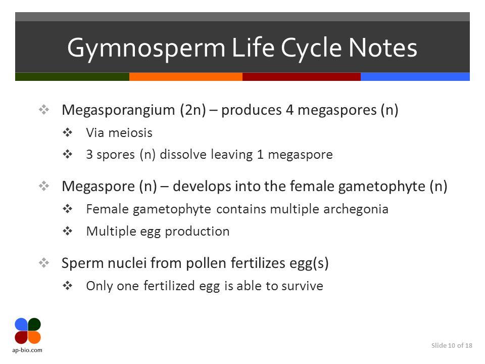 Gymnosperm Life Cycle Notes