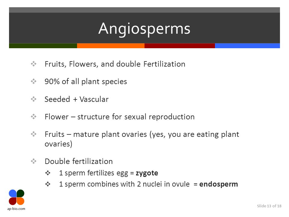 Angiosperms Fruits, Flowers, and double Fertilization