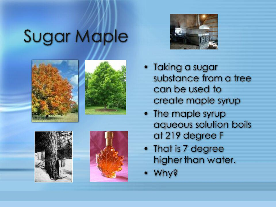 Sugar Maple Taking a sugar substance from a tree can be used to create maple syrup. The maple syrup aqueous solution boils at 219 degree F.