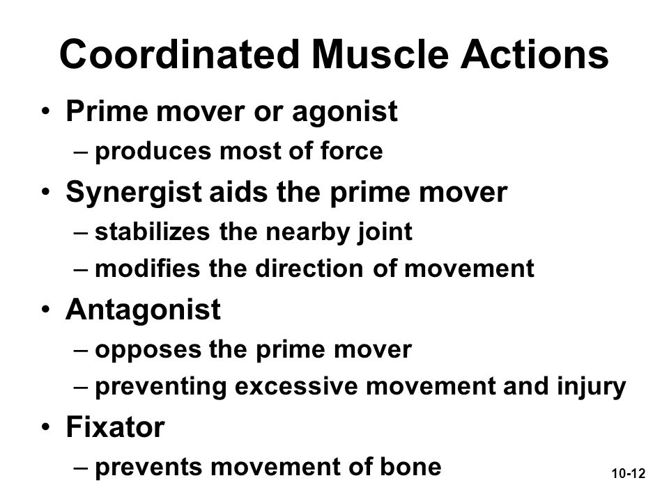 Coordinated Muscle Actions