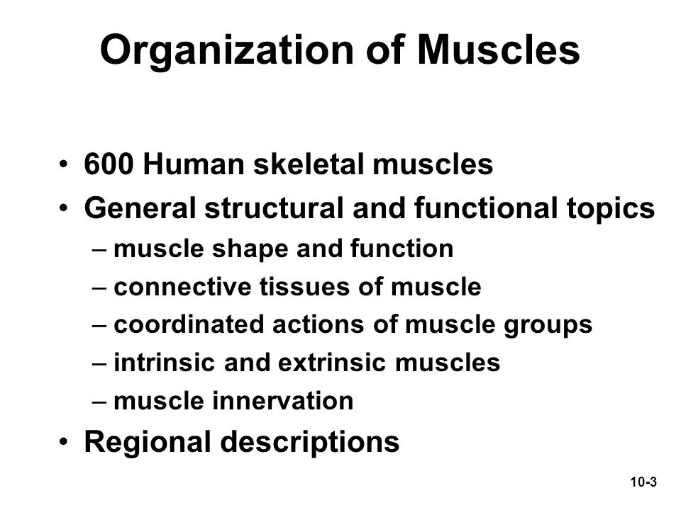 Organization of Muscles
