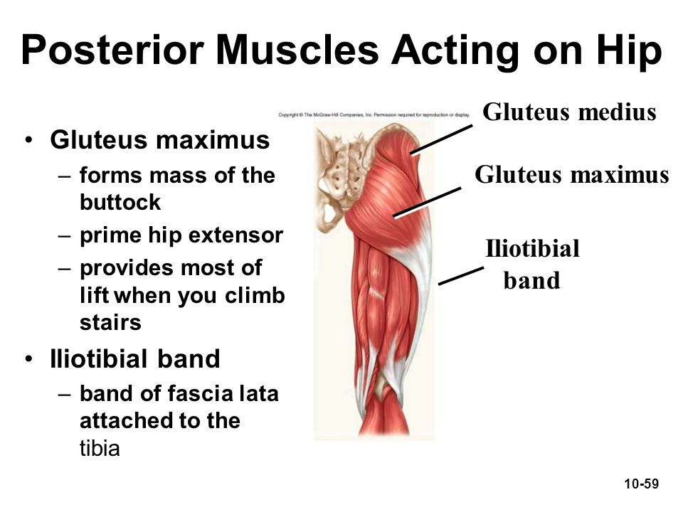 Posterior Muscles Acting on Hip