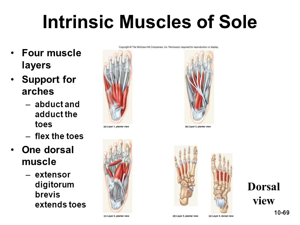 Intrinsic Muscles of Sole