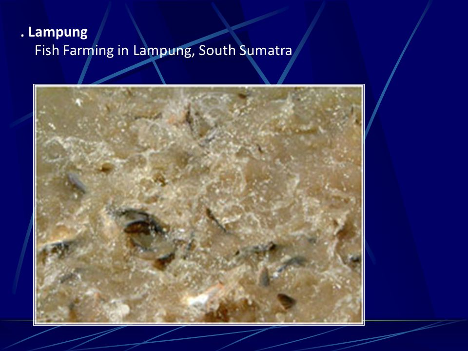 . Lampung Fish Farming in Lampung, South Sumatra