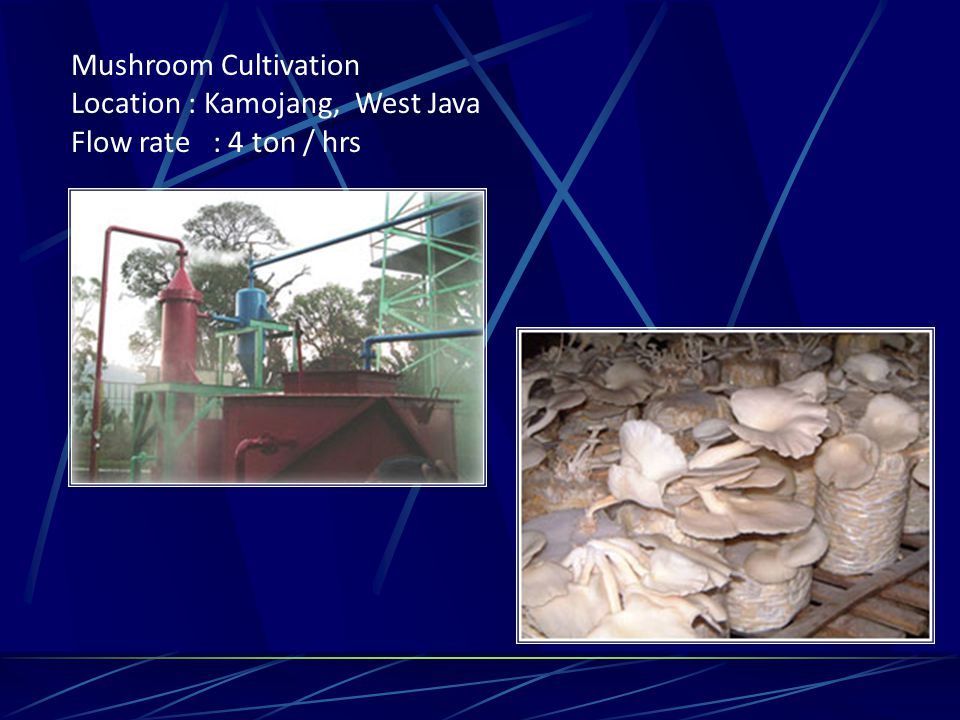 Mushroom Cultivation Location : Kamojang, West Java Flow rate : 4 ton / hrs