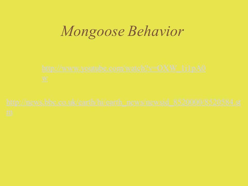 Mongoose Behavior http://www.youtube.com/watch v=OXW_1i1pA0w