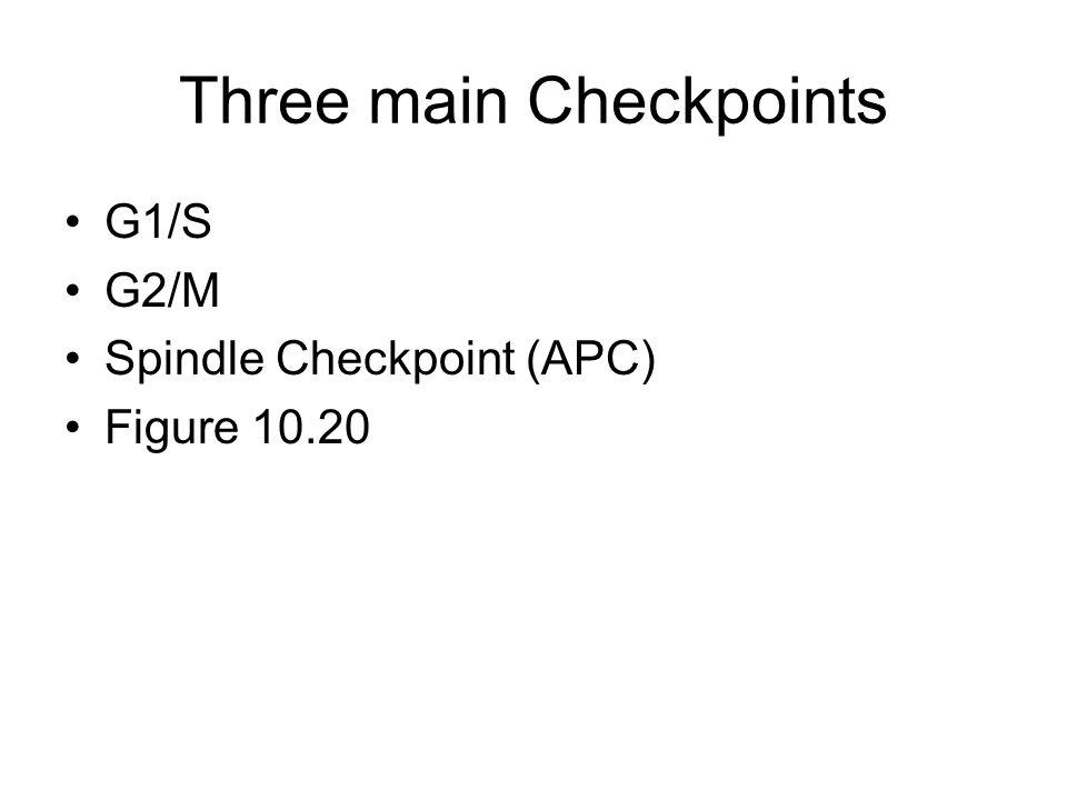 Three main Checkpoints