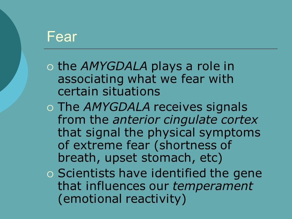 Fear the AMYGDALA plays a role in associating what we fear with certain situations.