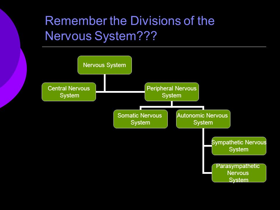 Remember the Divisions of the Nervous System