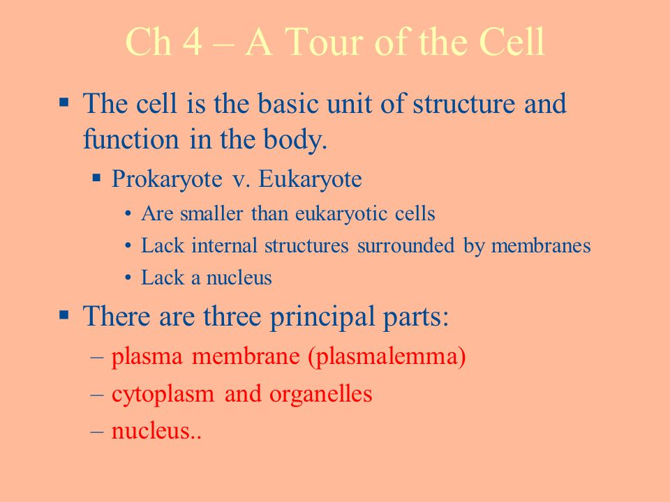 Ch 4 – A Tour of the Cell The cell is the basic unit of structure and function in the body. Prokaryote v. Eukaryote.