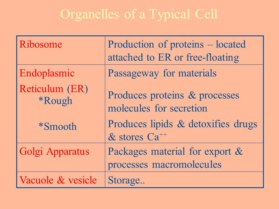 Organelles of a Typical Cell