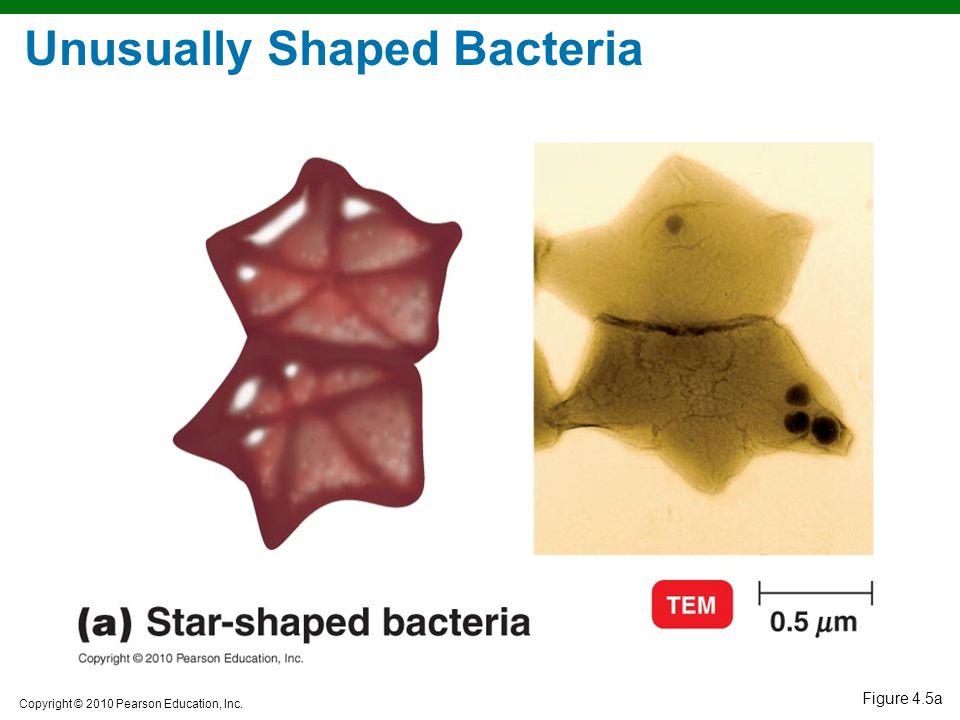 Unusually Shaped Bacteria