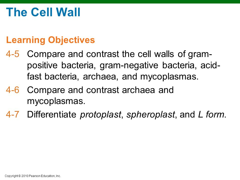 The Cell Wall Learning Objectives