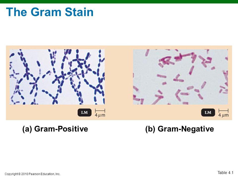 The Gram Stain Gram-Positive (b) Gram-Negative Table 4.1