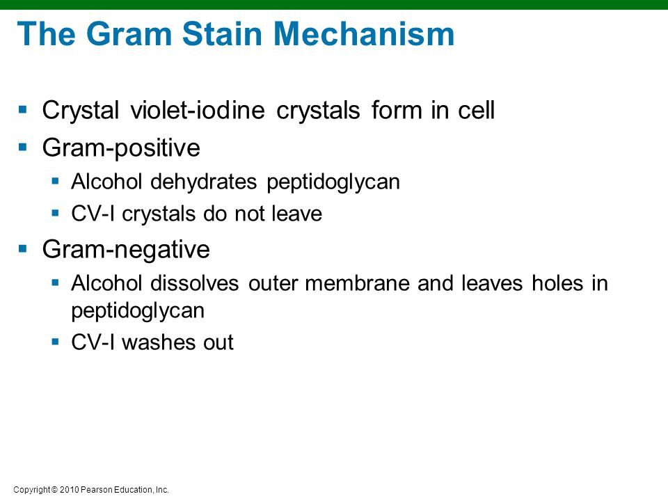 The Gram Stain Mechanism