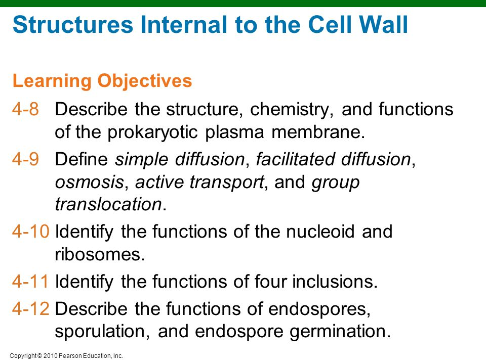 Structures Internal to the Cell Wall