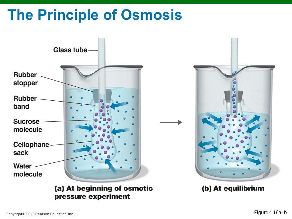 The Principle of Osmosis