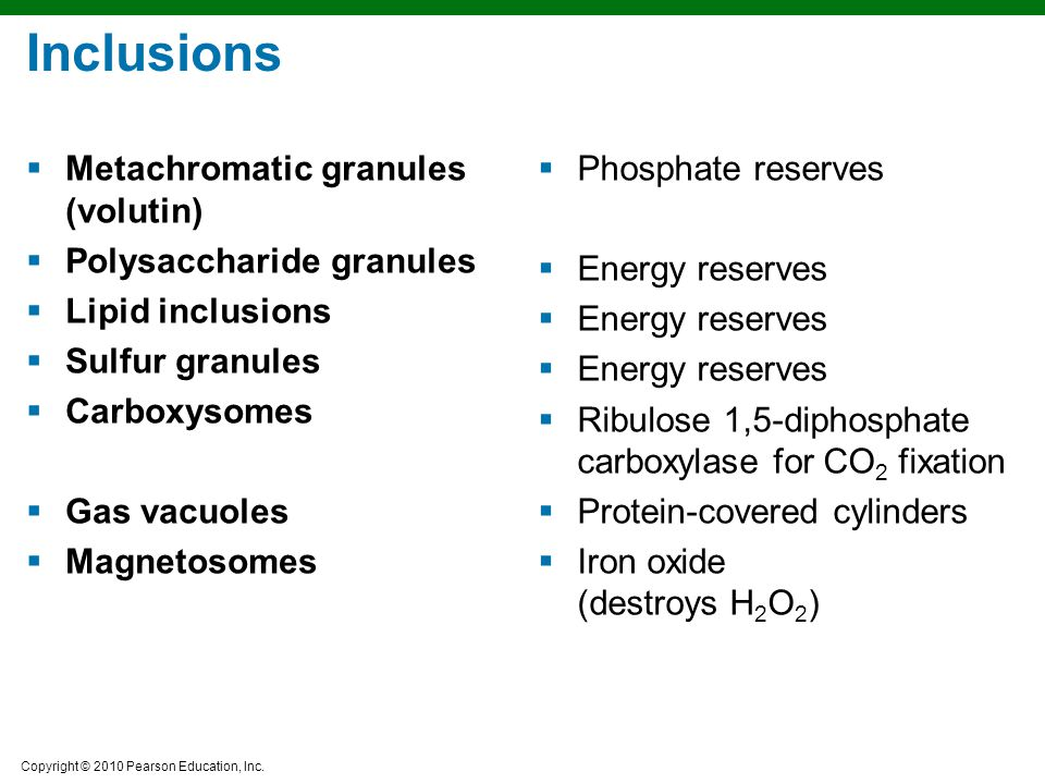 Inclusions Metachromatic granules (volutin) Polysaccharide granules
