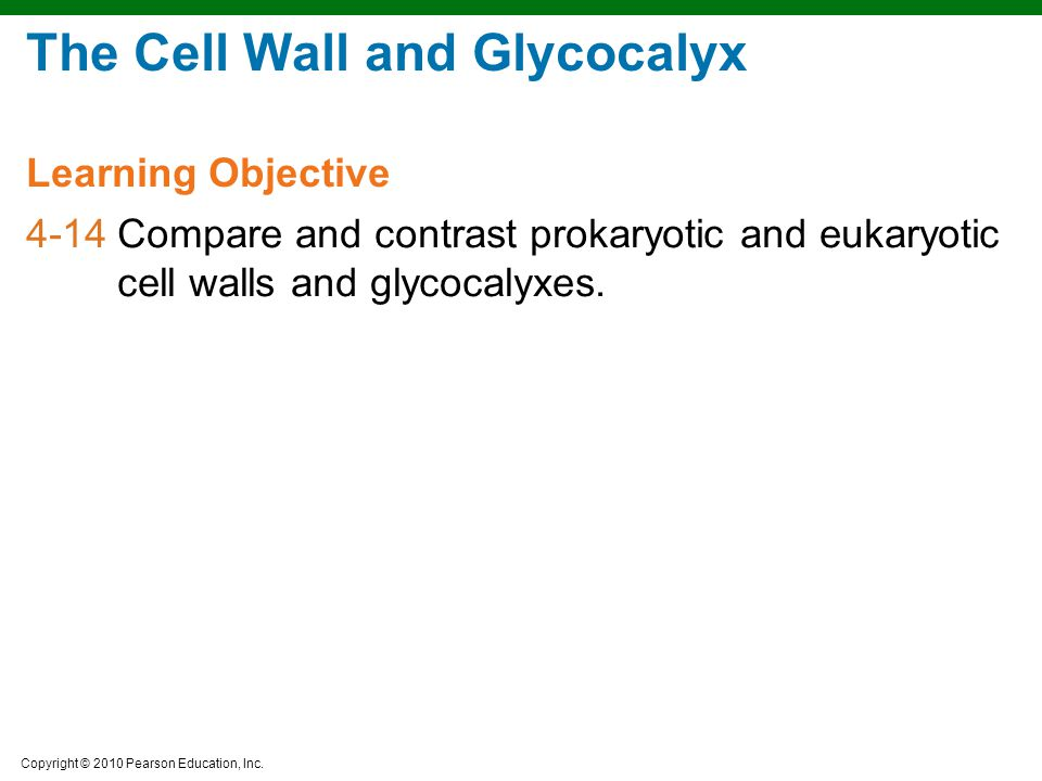 The Cell Wall and Glycocalyx
