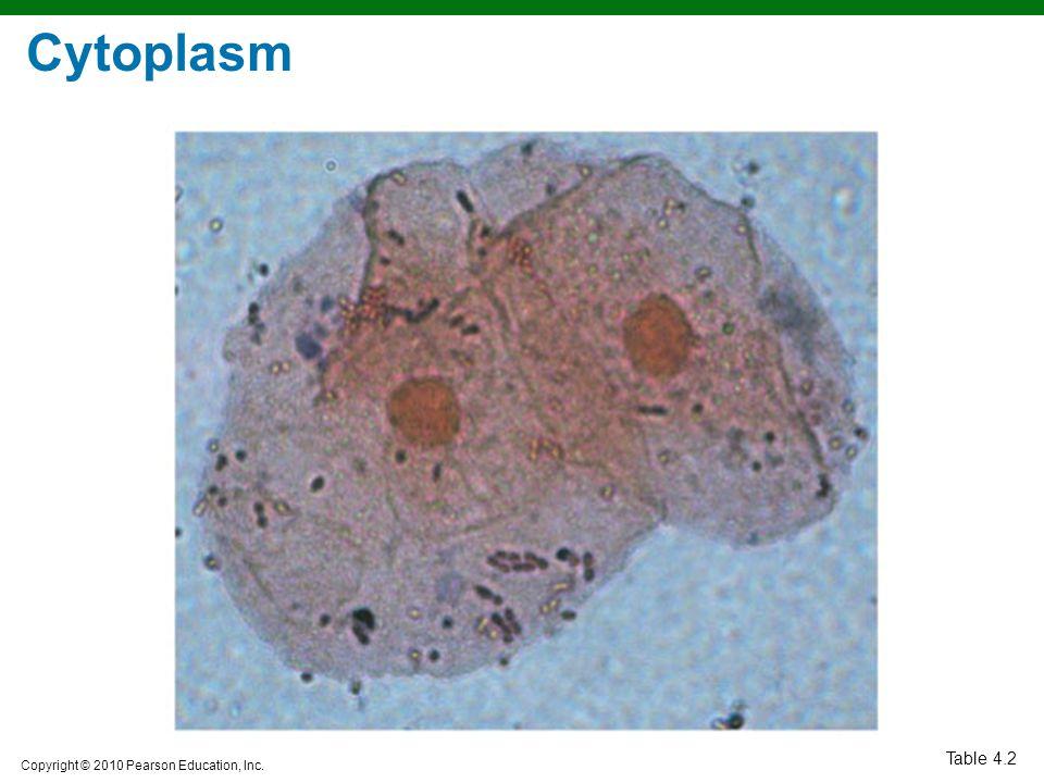 Cytoplasm Table 4.2