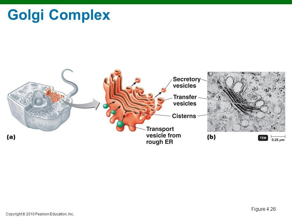 Golgi Complex Figure 4.26