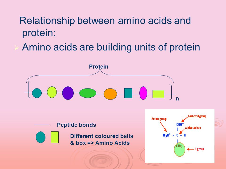Relationship between amino acids and protein: