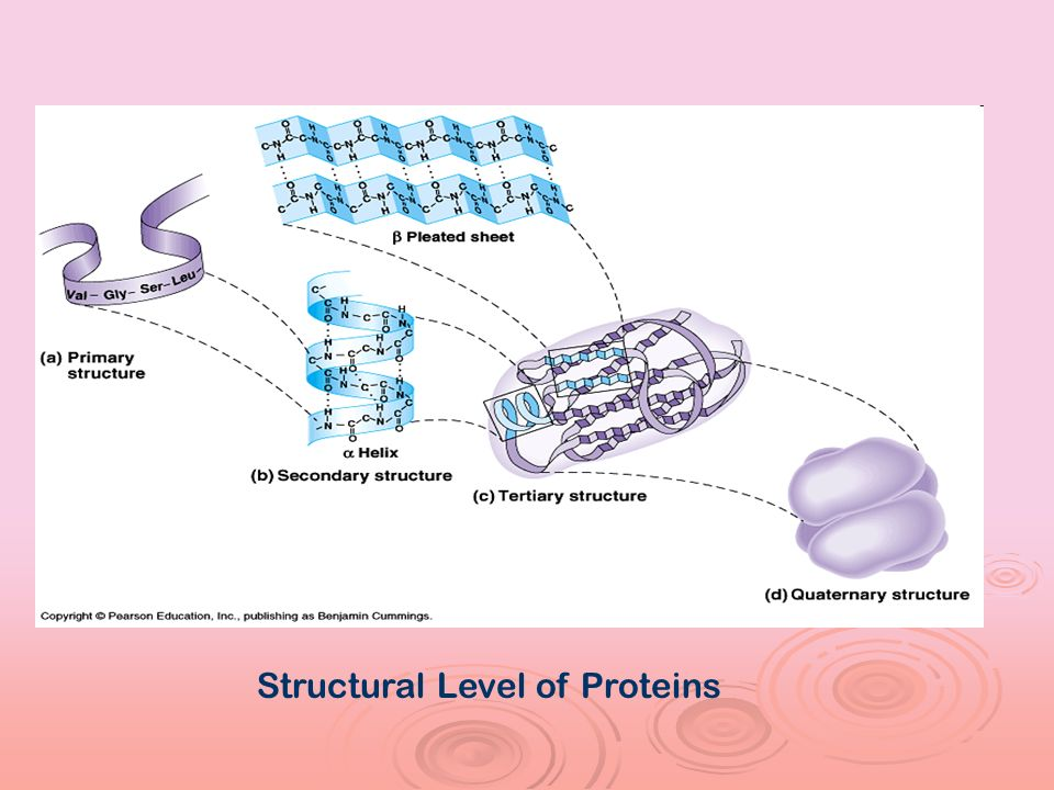 Structural Level of Proteins