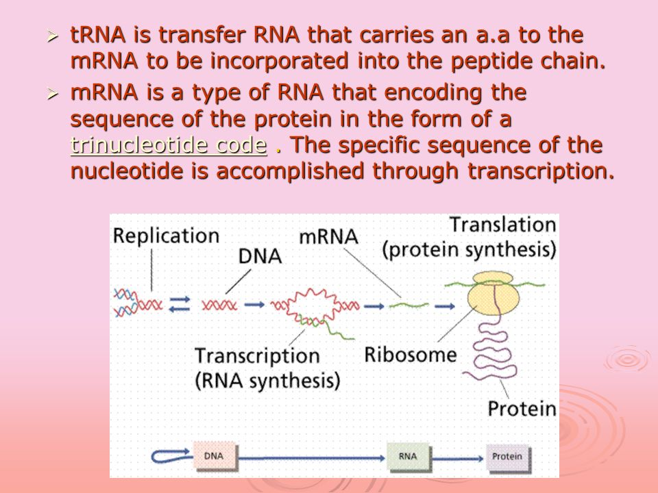 tRNA is transfer RNA that carries an a