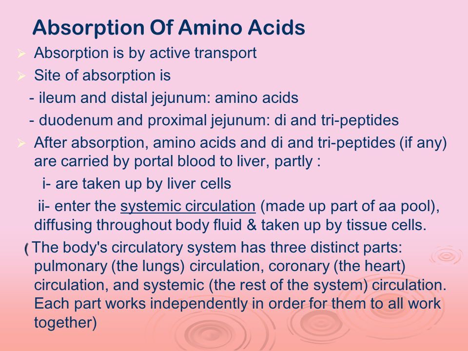 Absorption Of Amino Acids