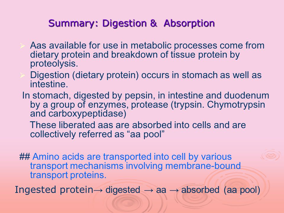 Summary: Digestion & Absorption