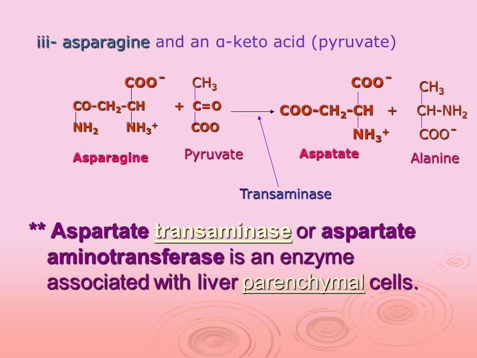 iii- asparagine and an α-keto acid (pyruvate)