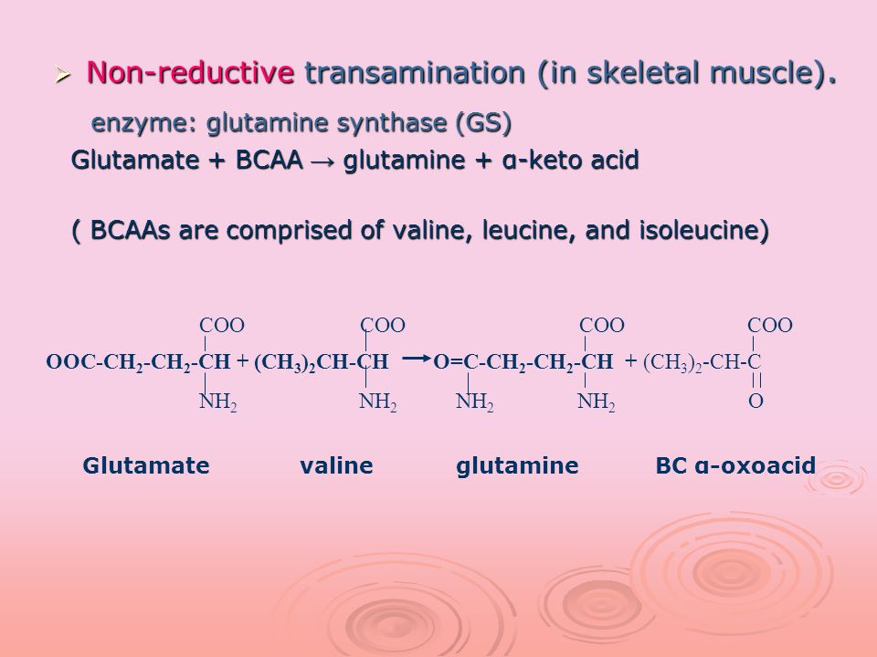 enzyme: glutamine synthase (GS)