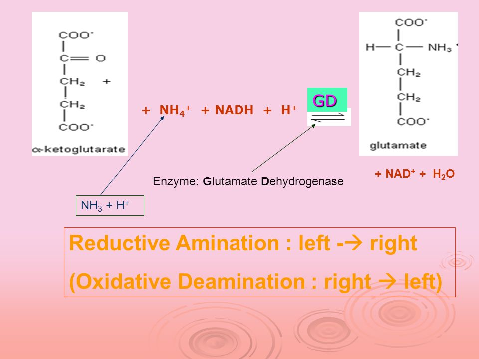 Reductive Amination : left - right
