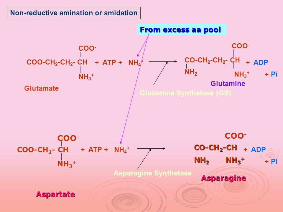 COO- COO- Non-reductive amination or amidation From excess aa pool